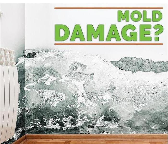 Mold Remediation Ways to Prevent Mold Growth.